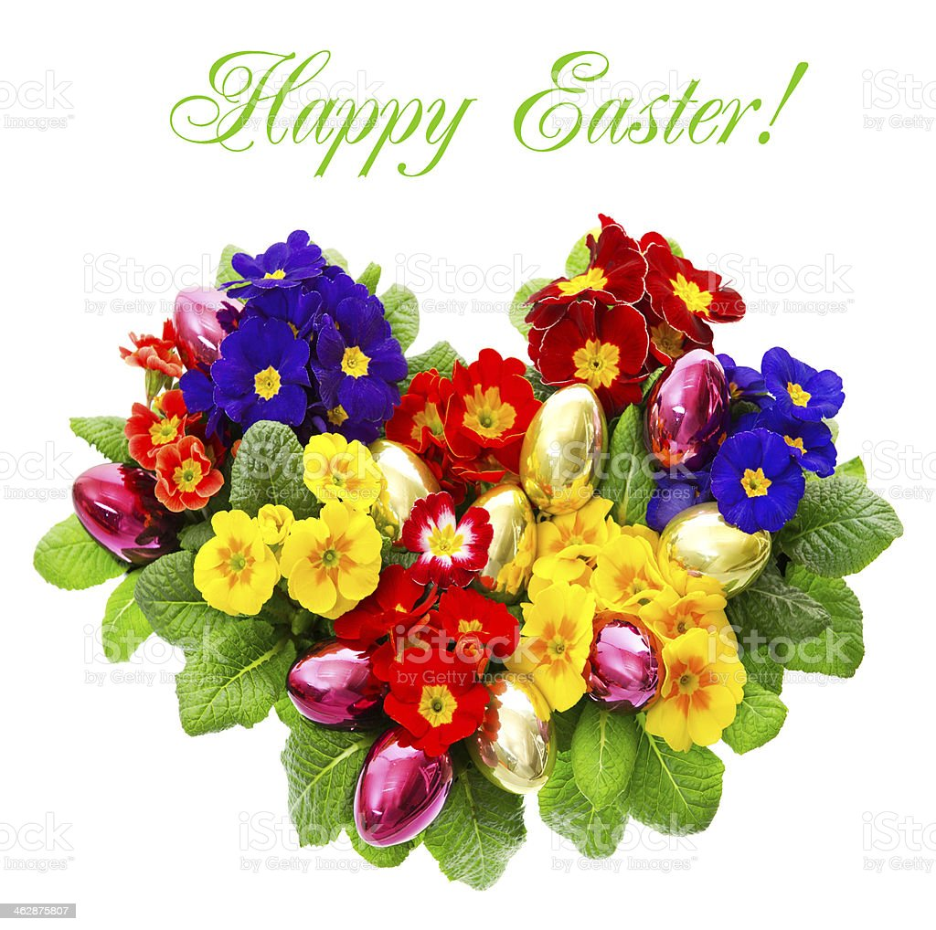 colorful primula flowers with easter eggs decoration royalty-free stock photo