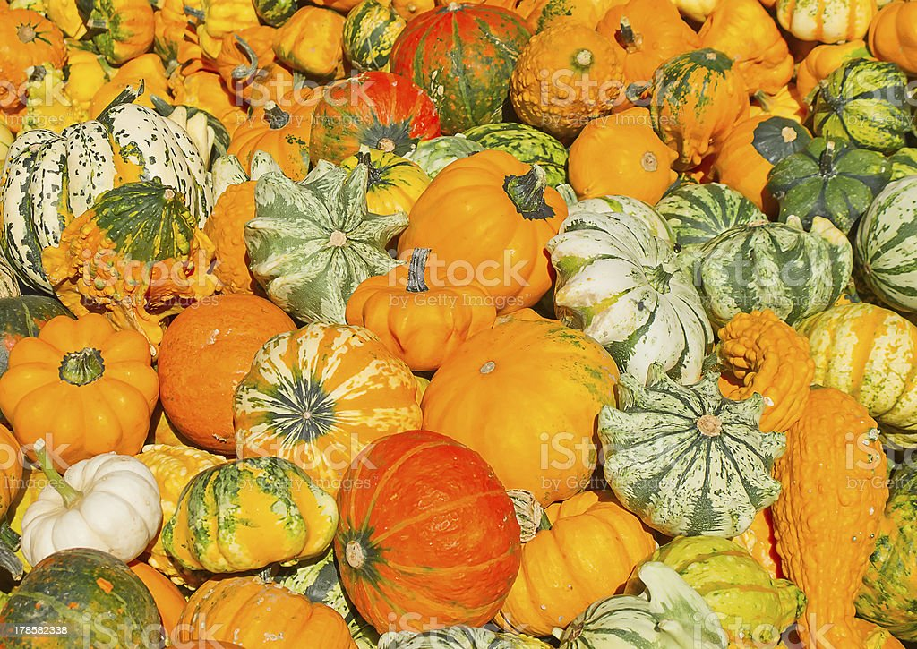 Colorful pumpkins royalty-free stock photo