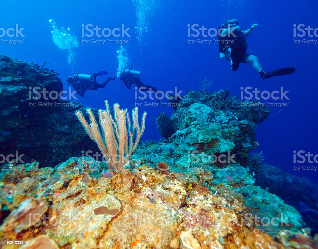 Colorful reef and group of divers, Cayo Largo, Cuba stock photo