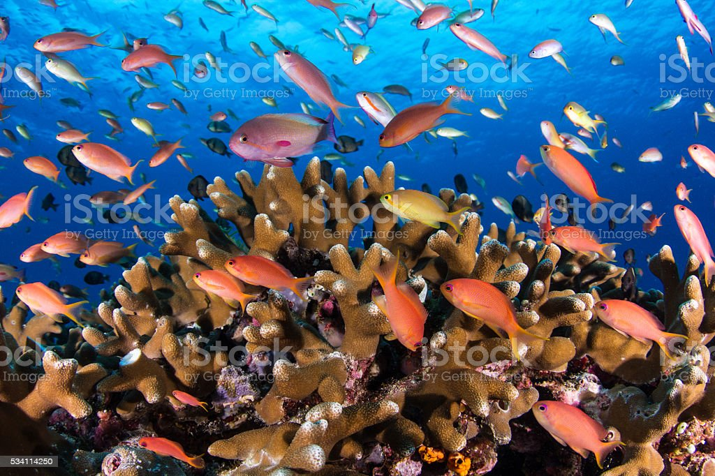 Colorful Reef Fish stock photo