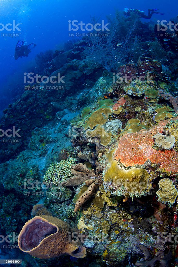 Colorful Reef in St Lucia royalty-free stock photo