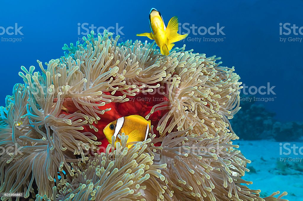 Colorful reef scene with copy space for your text stock photo