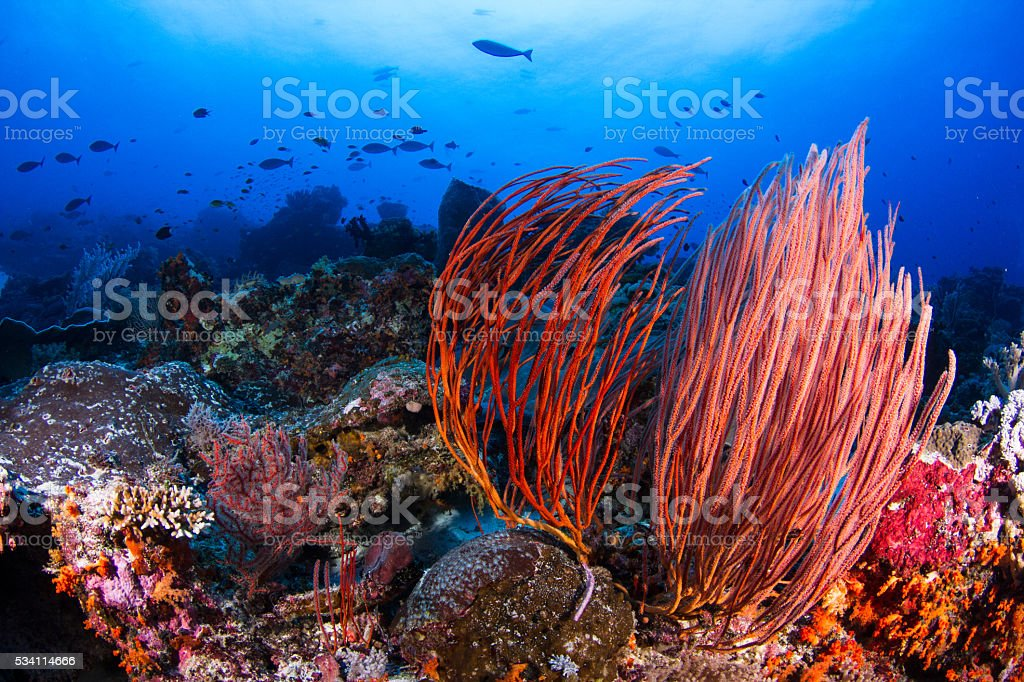 Colorful Reef with Deep Blue Water stock photo