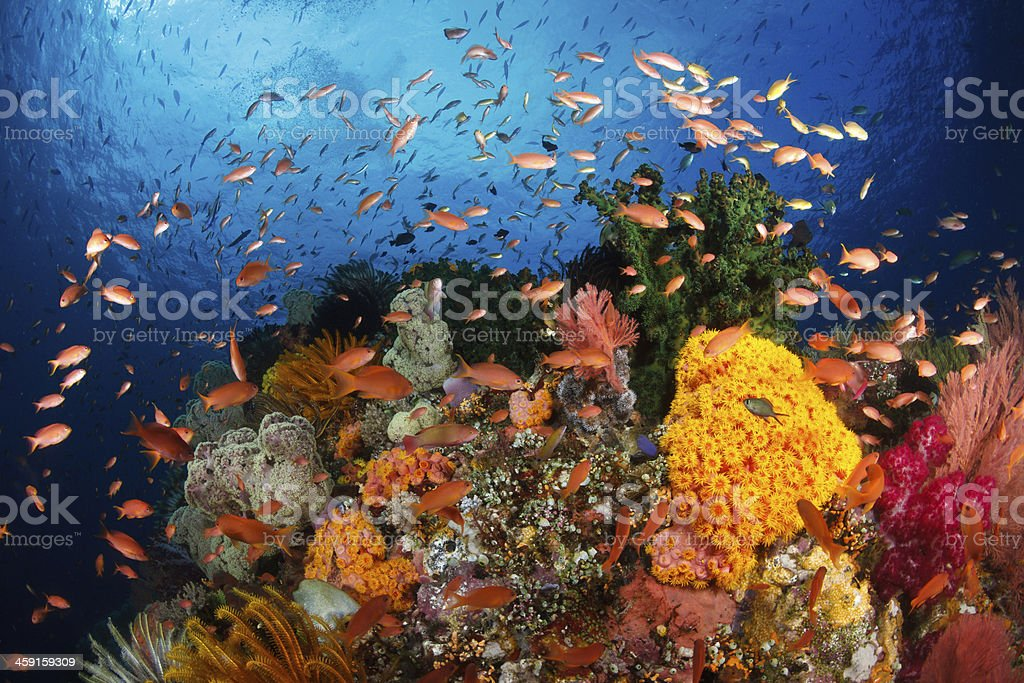 Colorful reef,Raja ampat,Indonesia stock photo