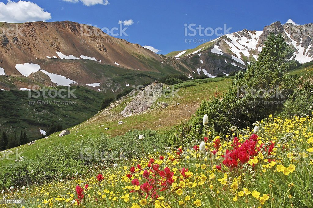 Colorful Rocky Mountain Wildflowers stock photo