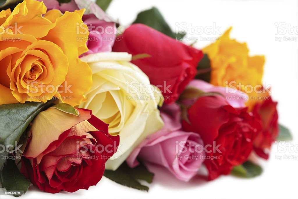 Colorful Roses. royalty-free stock photo