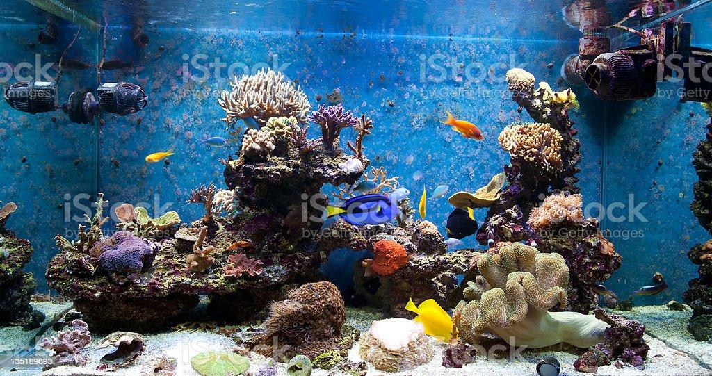 Colorful Saltwater Aquarium stock photo