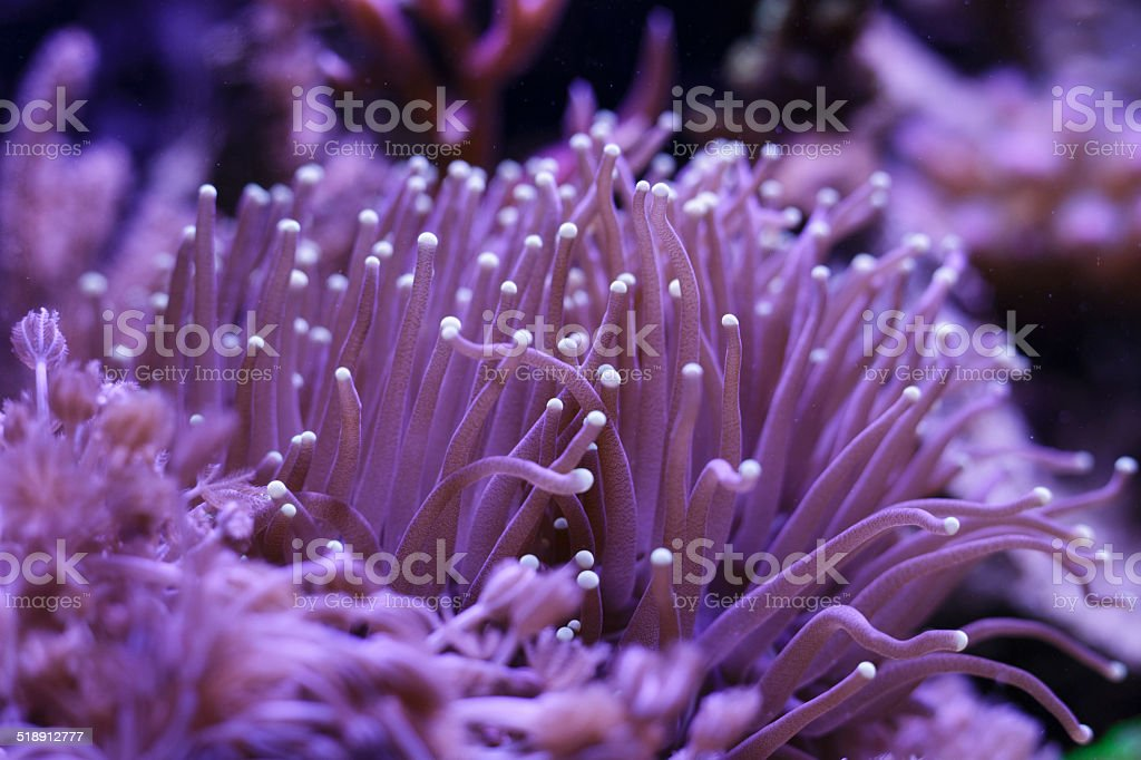 Colorful Saltwater Aquarium stock photo