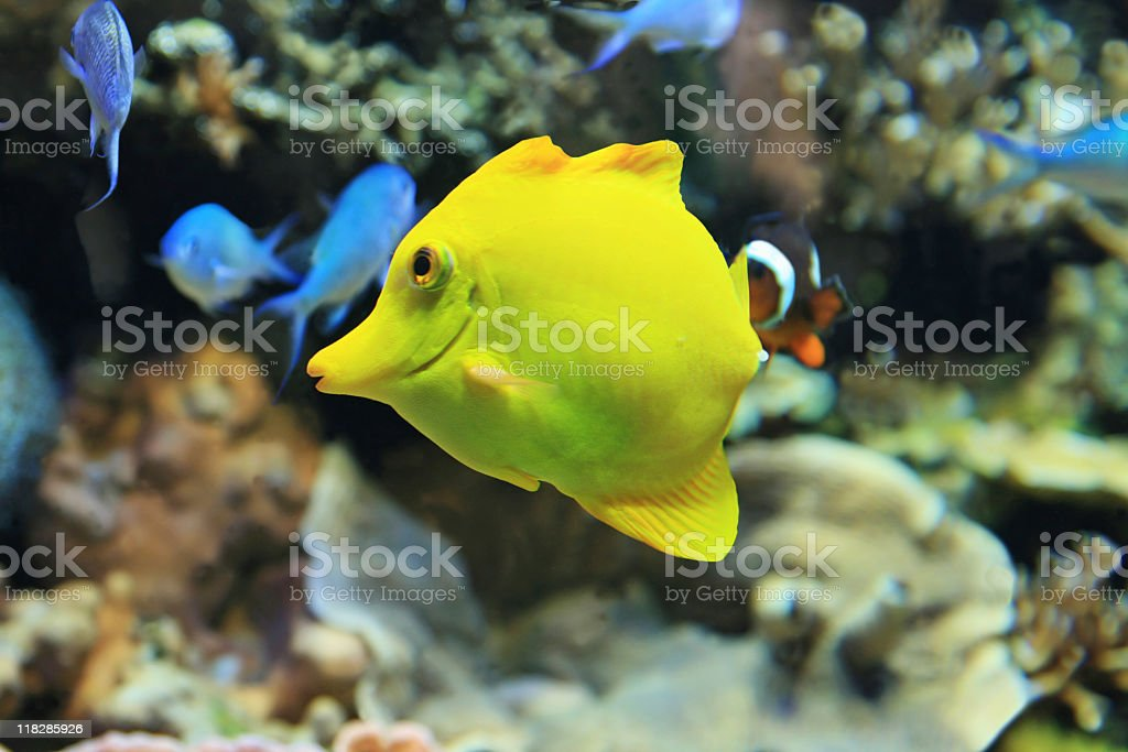 Colorful saltwater world. royalty-free stock photo