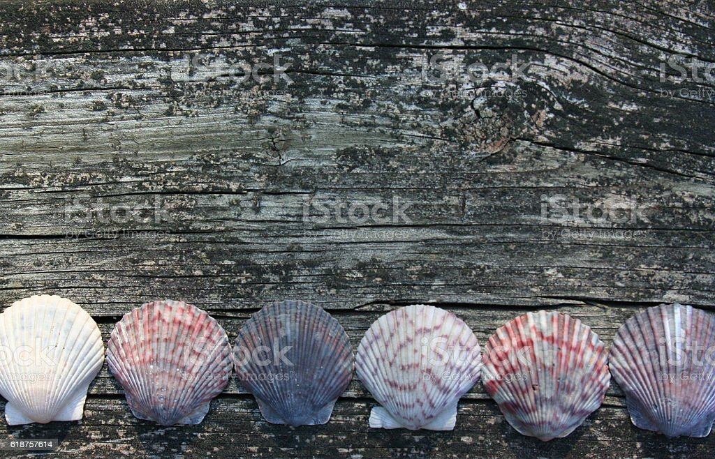 Colorful Scallops in a Row stock photo