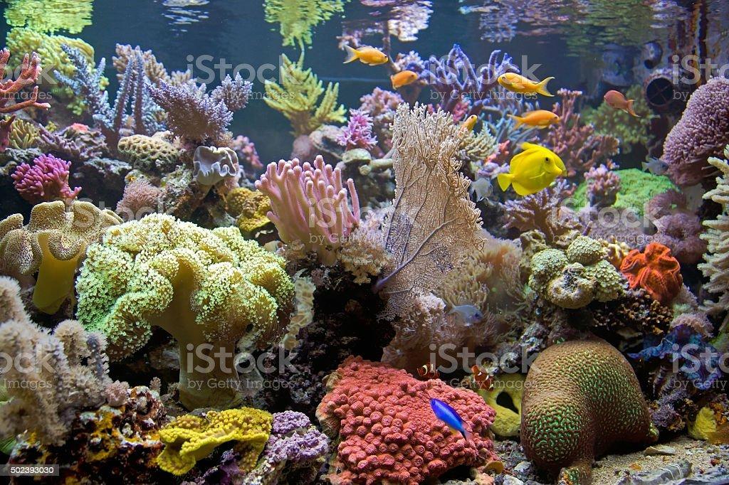 Colorful Sea Aquarium stock photo