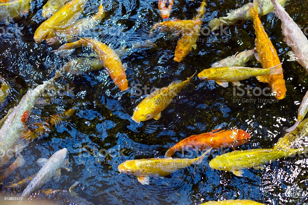 colorful sea fish in the aquarium stock photo