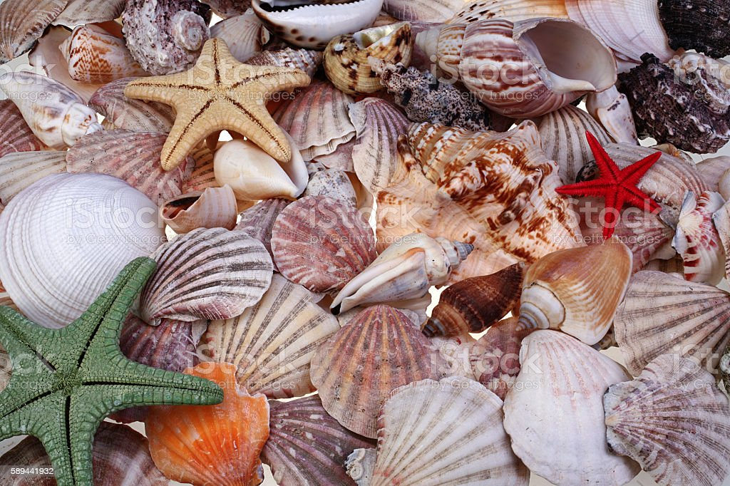 Colorful seashells and starfishes as background stock photo