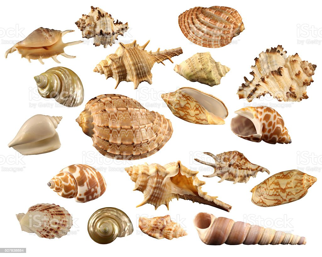 Colorful seashells collection isolated on a white background stock photo