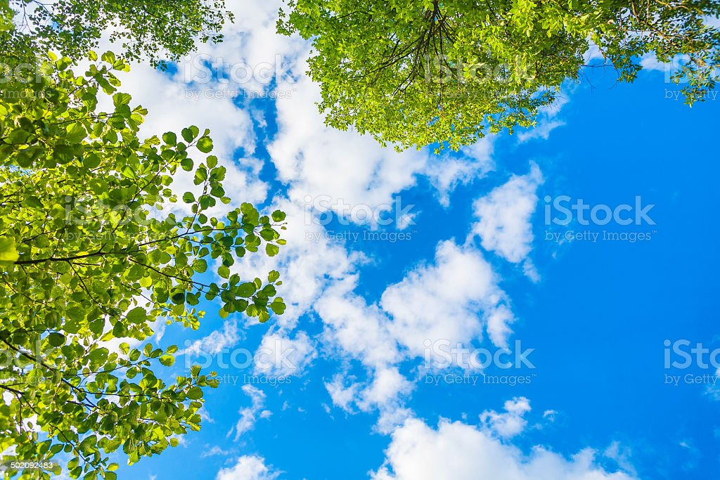 Colorful sky background with leaves stock photo