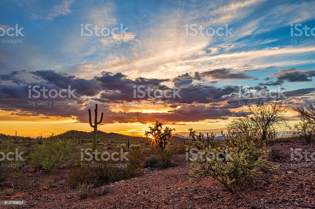 Colorful Sonoran Desert sunset with Saguaro Cactus stock photo