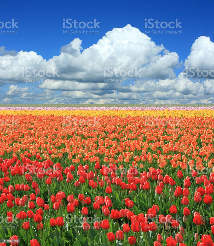 Colorful Spring Landscape (XXL) royalty-free stock photo