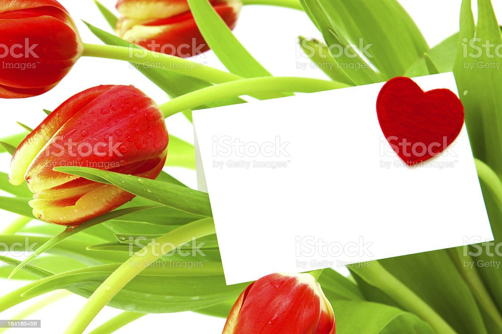 Colorful spring Tulips . royalty-free stock photo