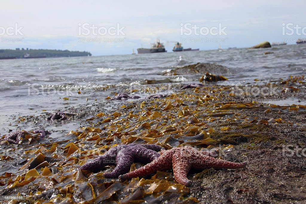 Colorful Starfish on a beach stock photo