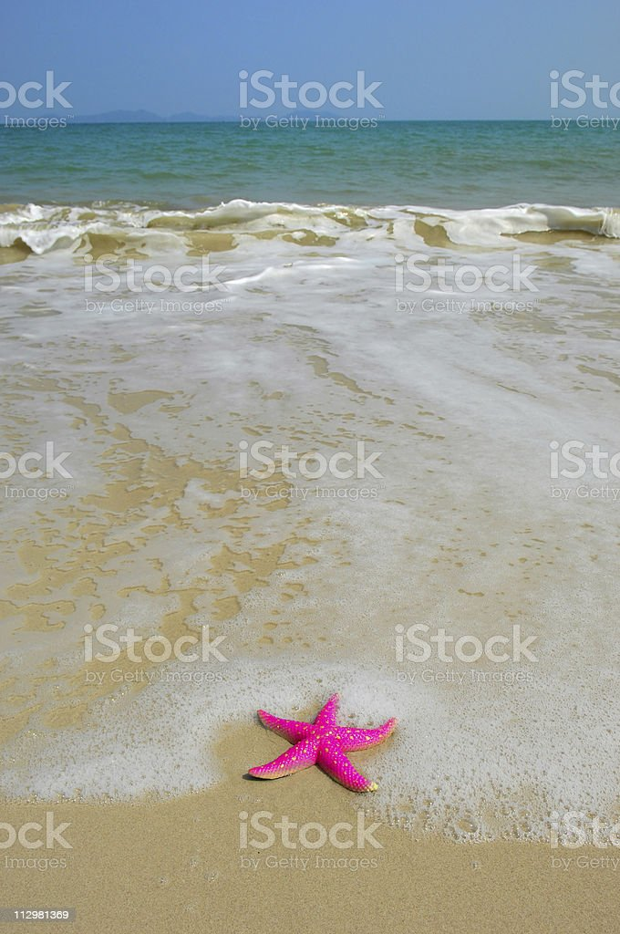 colorful starfish royalty-free stock photo