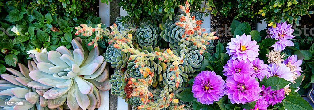 Colorful Succulents and Zinnia Flowers stock photo