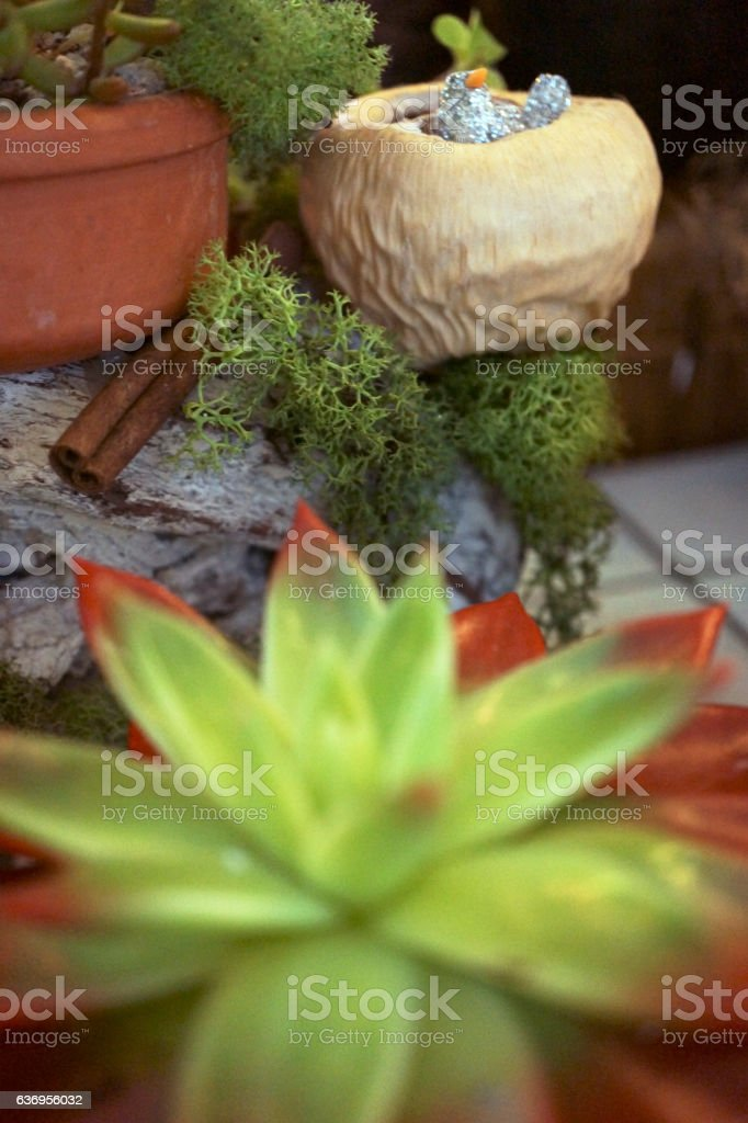 Colorful Succulents stock photo