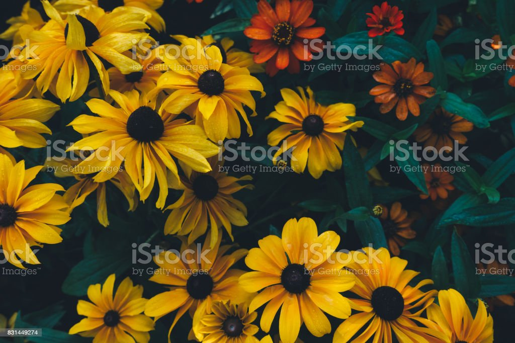 Colorful Summer Flowers In The Garden stock photo