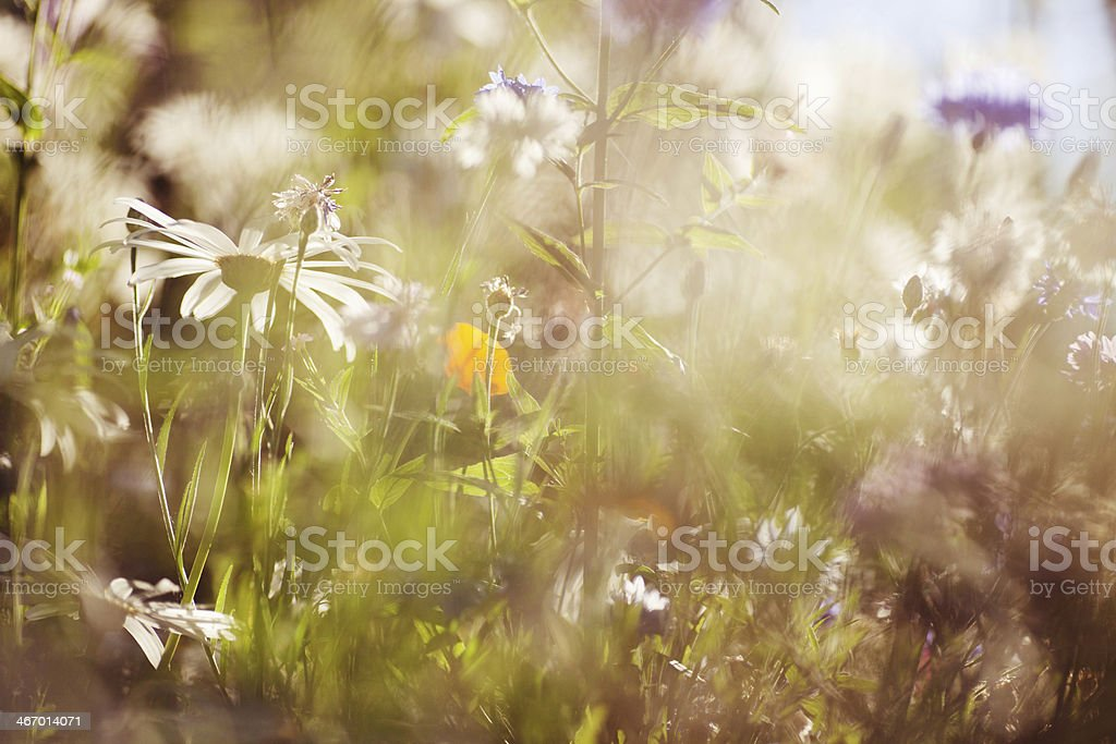 Colorful summer flowers royalty-free stock photo