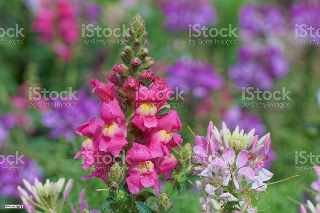 Colorful summer flowers stock photo