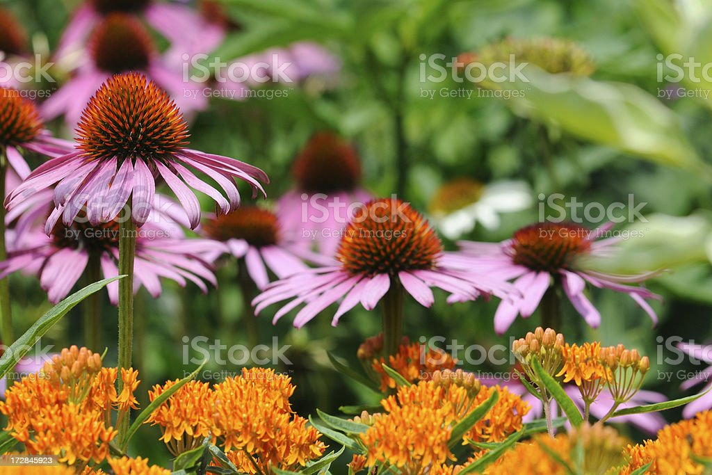 Colorful Summer Garden royalty-free stock photo
