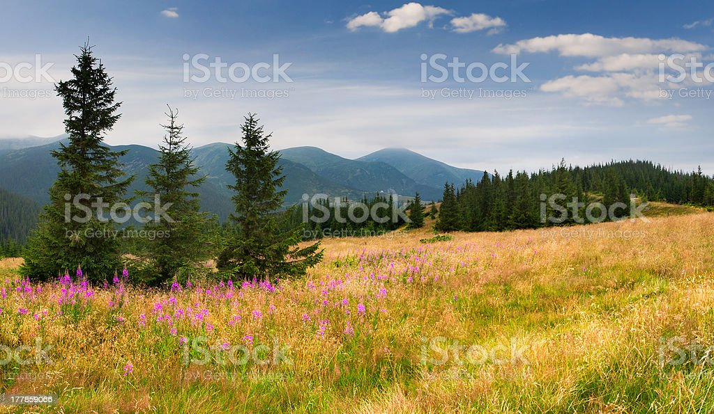 Colorful summer landscape in the Carpathian mountains royalty-free stock photo