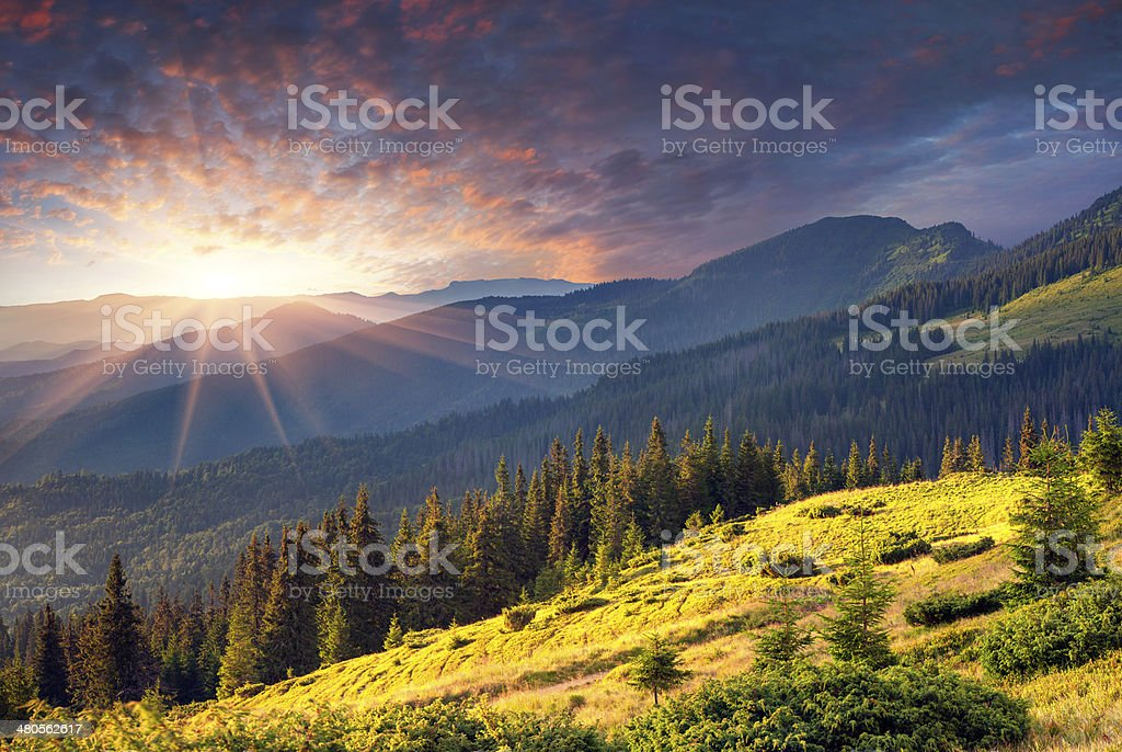 Colorful summer morning in the mountains. stock photo