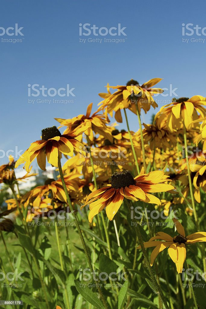 Colorful summer royalty-free stock photo