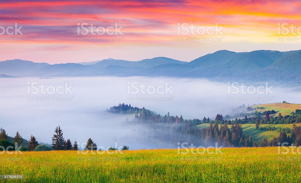 Colorful summer sunrise in the foggy Carpathian mountains stock photo