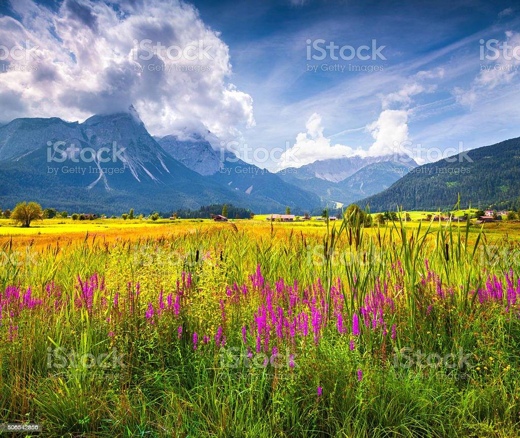 Colorful summer view of blossom valley stock photo