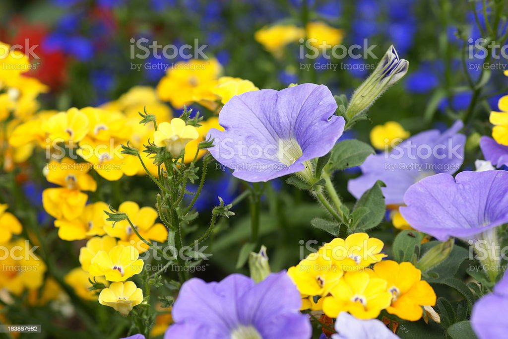 Colorful summerflowers royalty-free stock photo