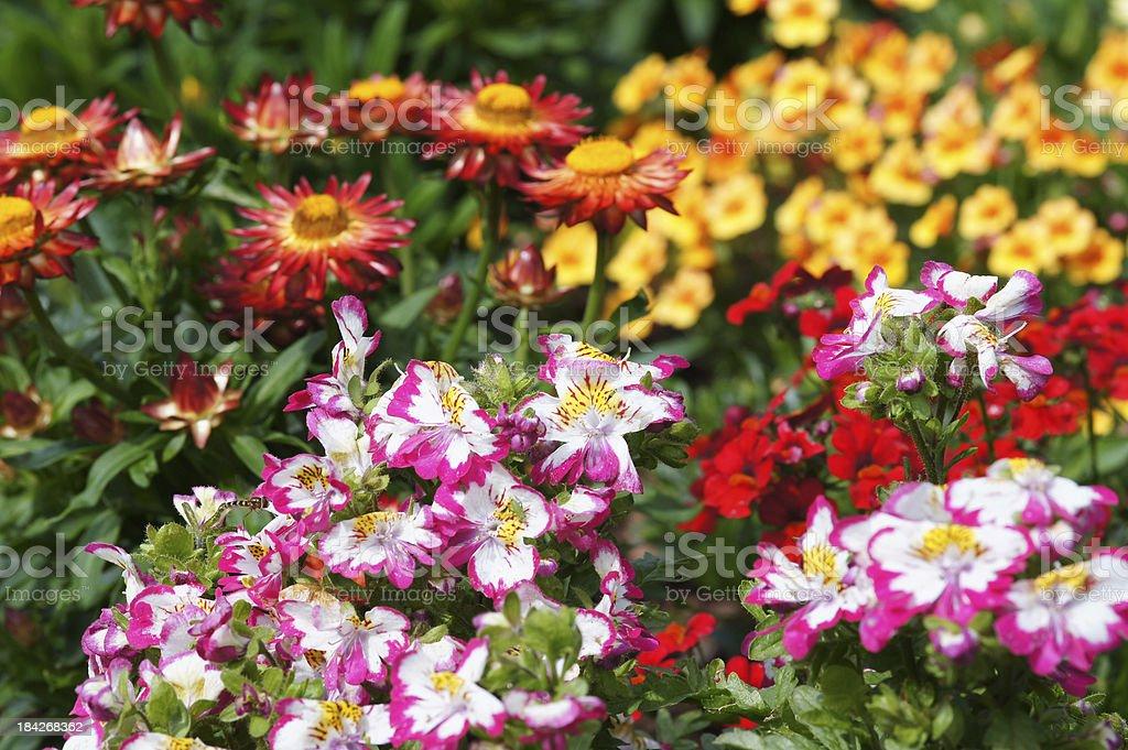 Colorful summerflowers stock photo