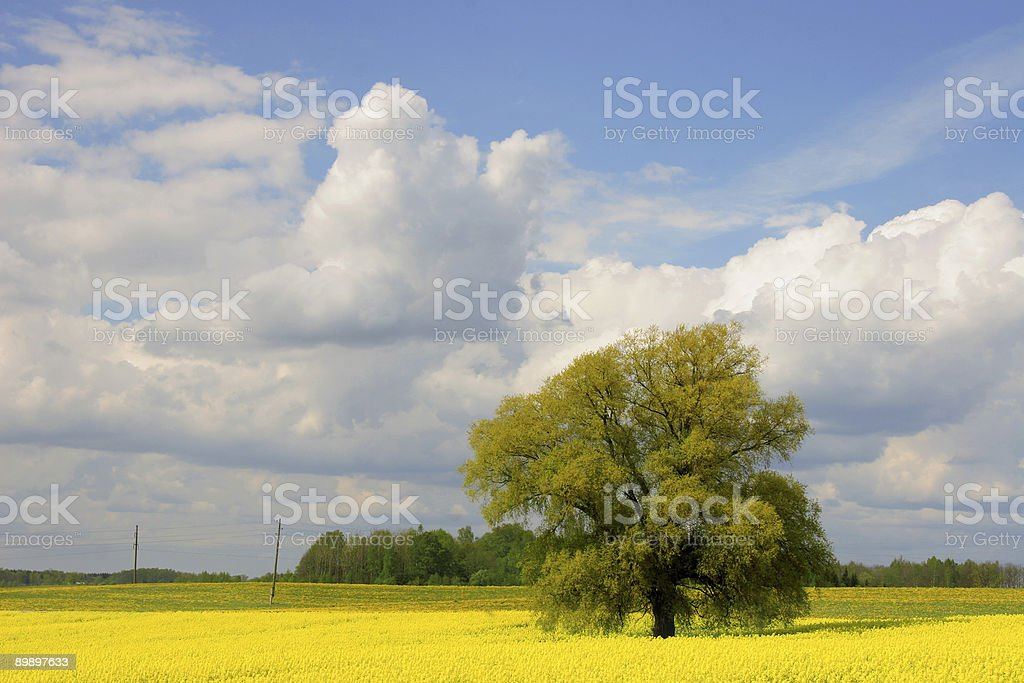 colorful summertime field royalty-free stock photo