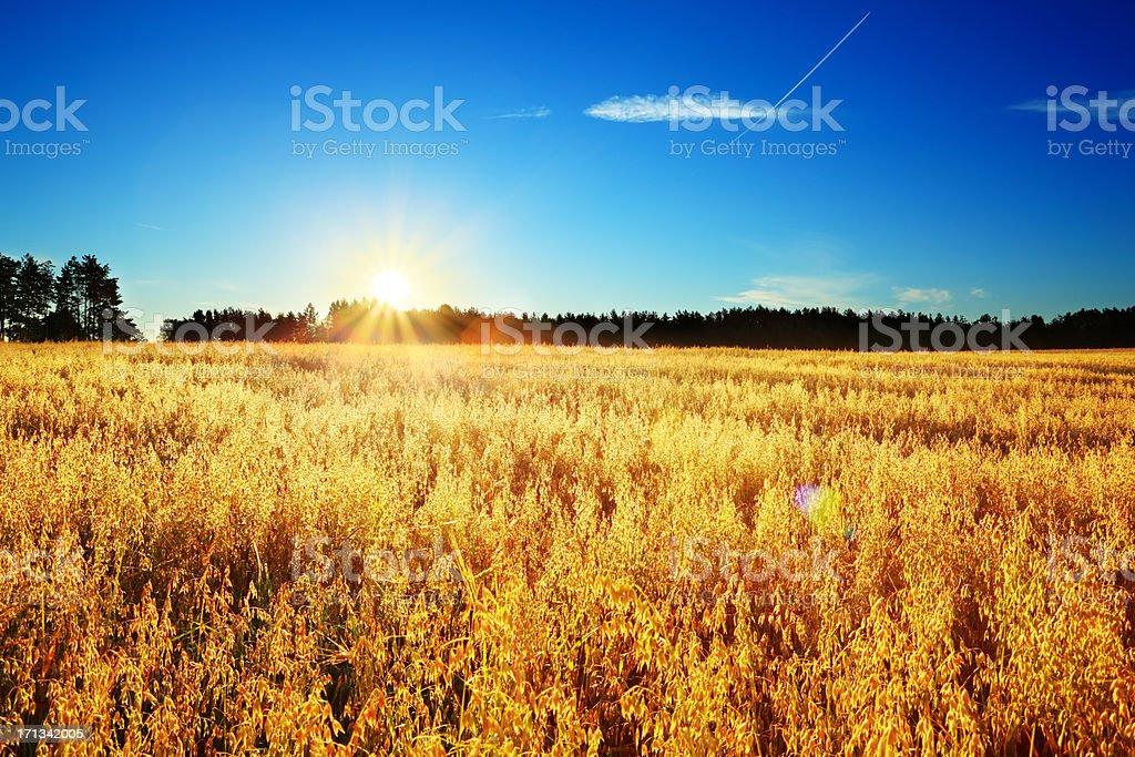 Colorful Sunrise above Wheat Field - Summer Landscape stock photo
