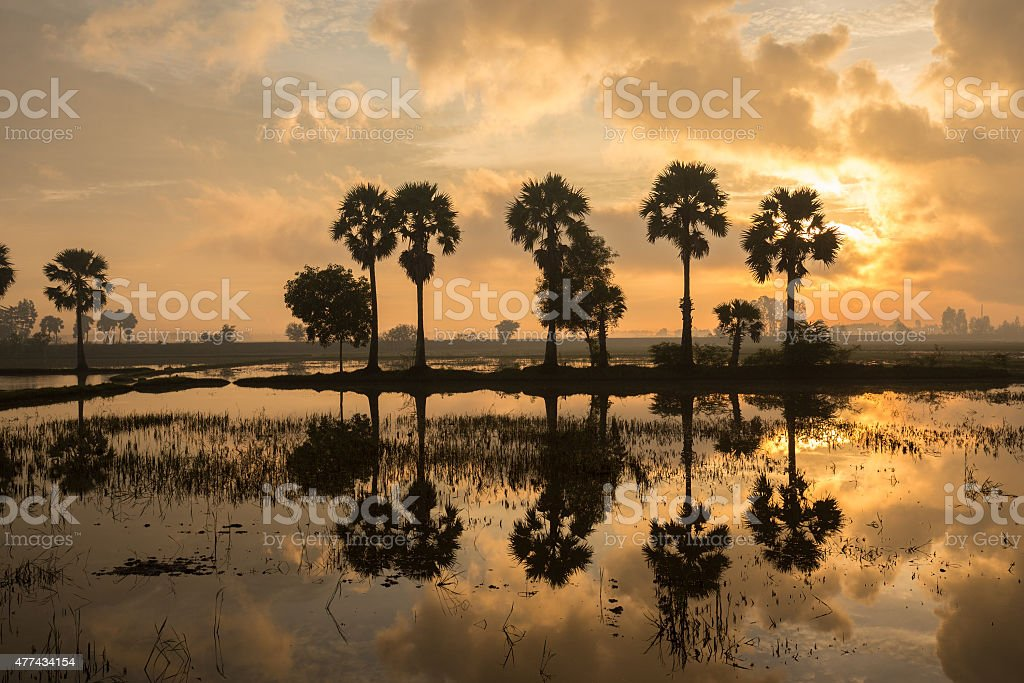 Colorful sunrise landscape with silhouettes of palm trees on Cha royalty-free stock photo