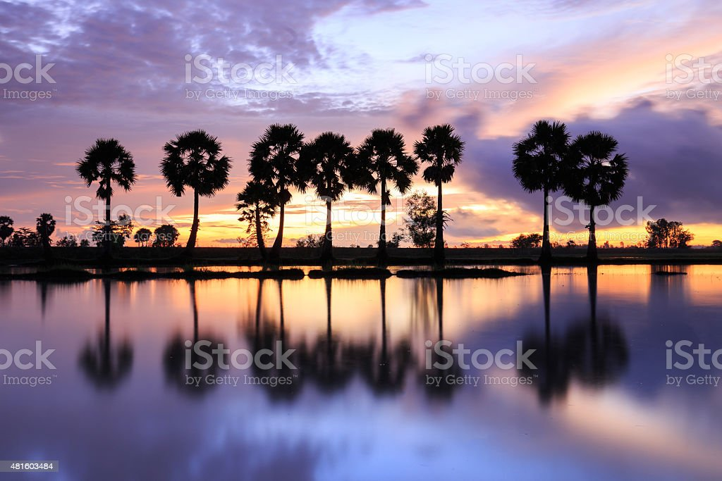Colorful sunrise landscape with silhouettes of palm trees royalty-free stock photo