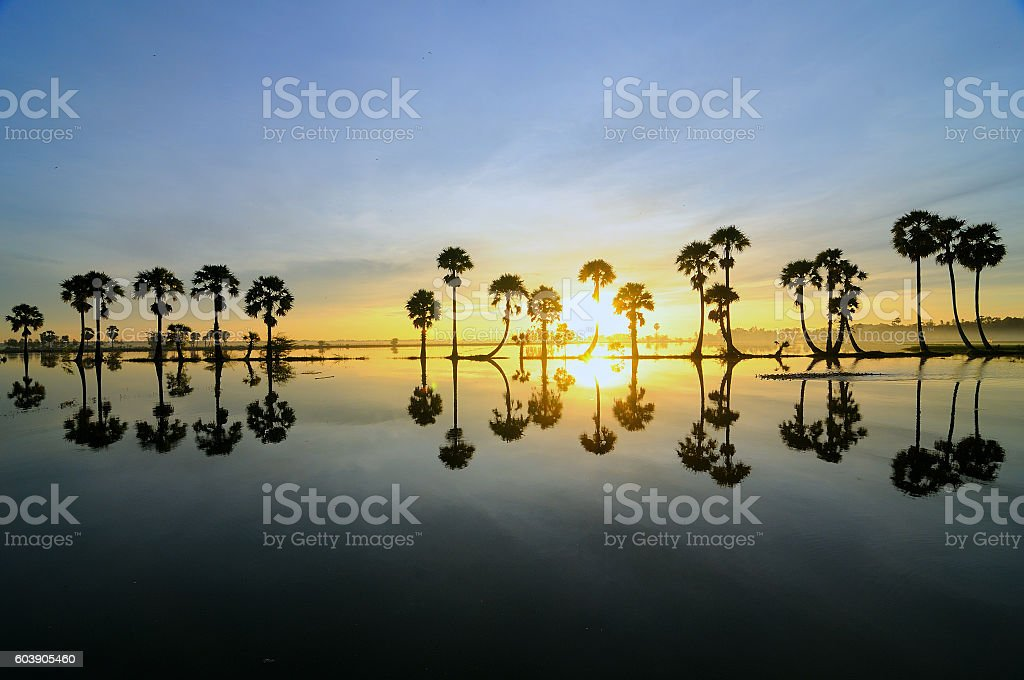Colorful sunrise with silhouettes of palms in Mekong Delta, Vietnam stock photo