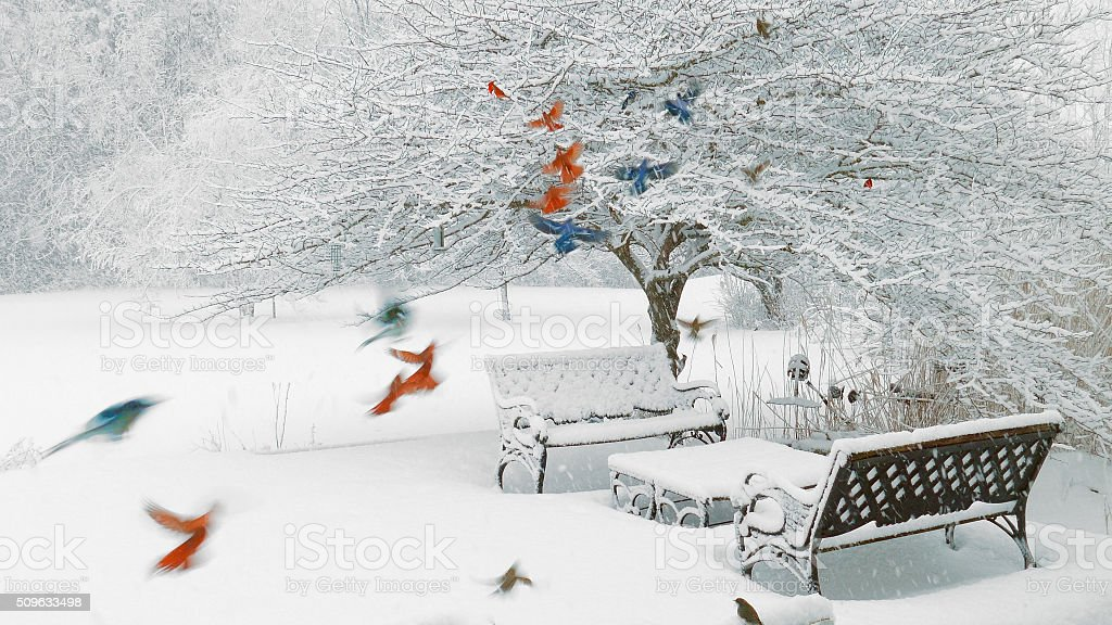Colorful Survival; Cardinals, bluejays, sparrows, junco, woodpecker in a blizzard stock photo