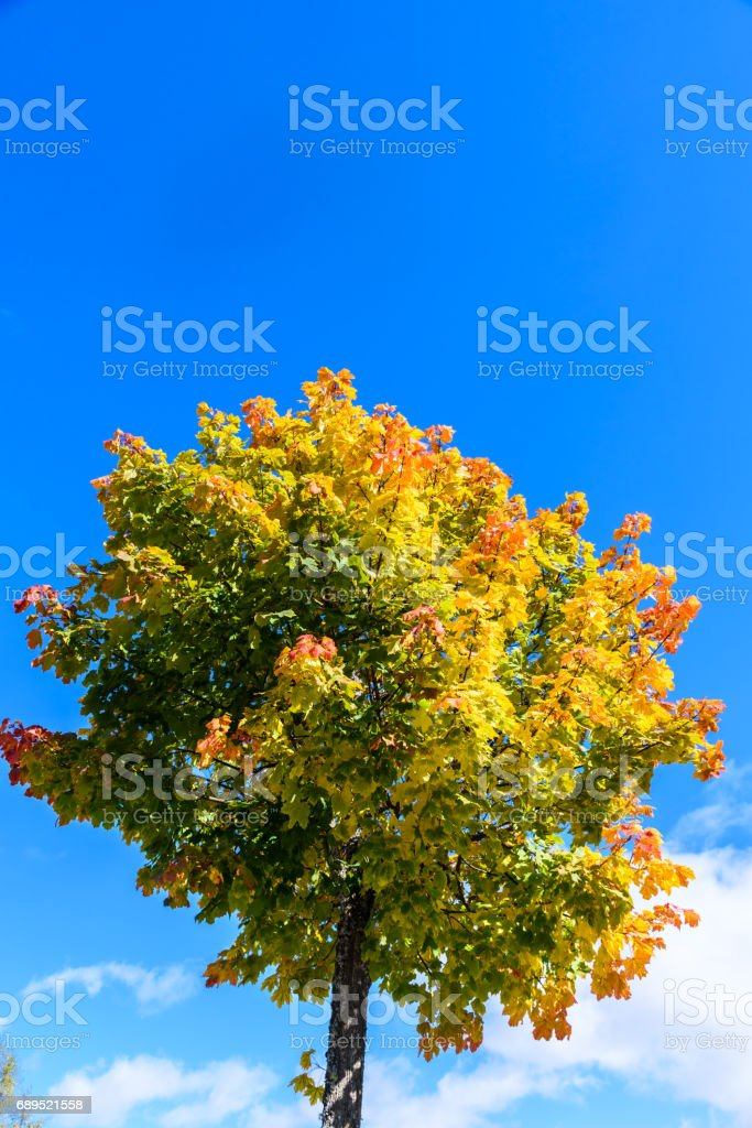 Colorful tree in autumn season stock photo