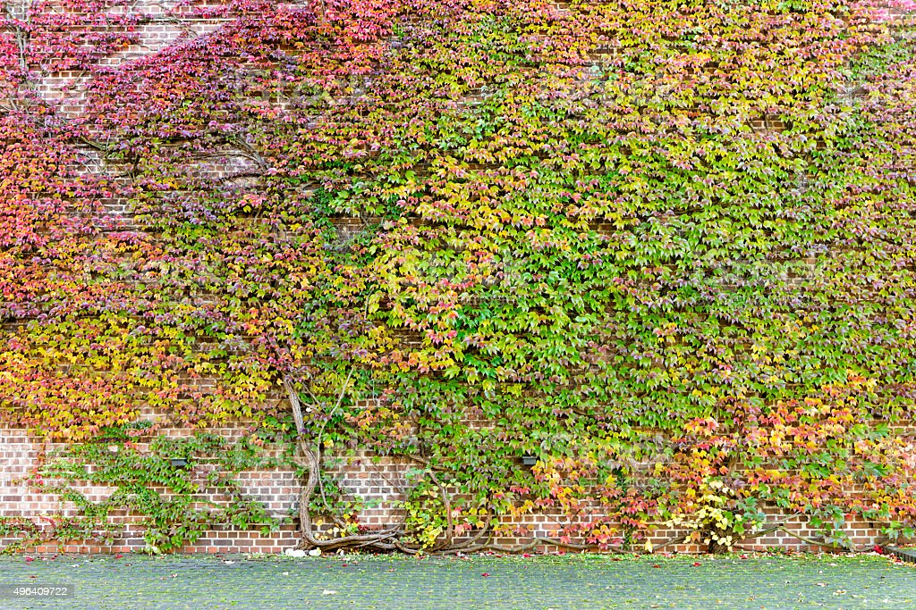 colorful tree in front of brickwall at autumn stock photo