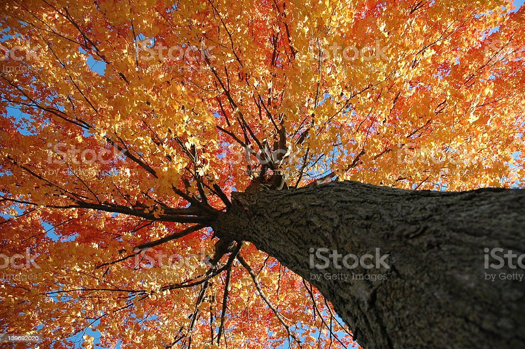 Colorful Tree stock photo
