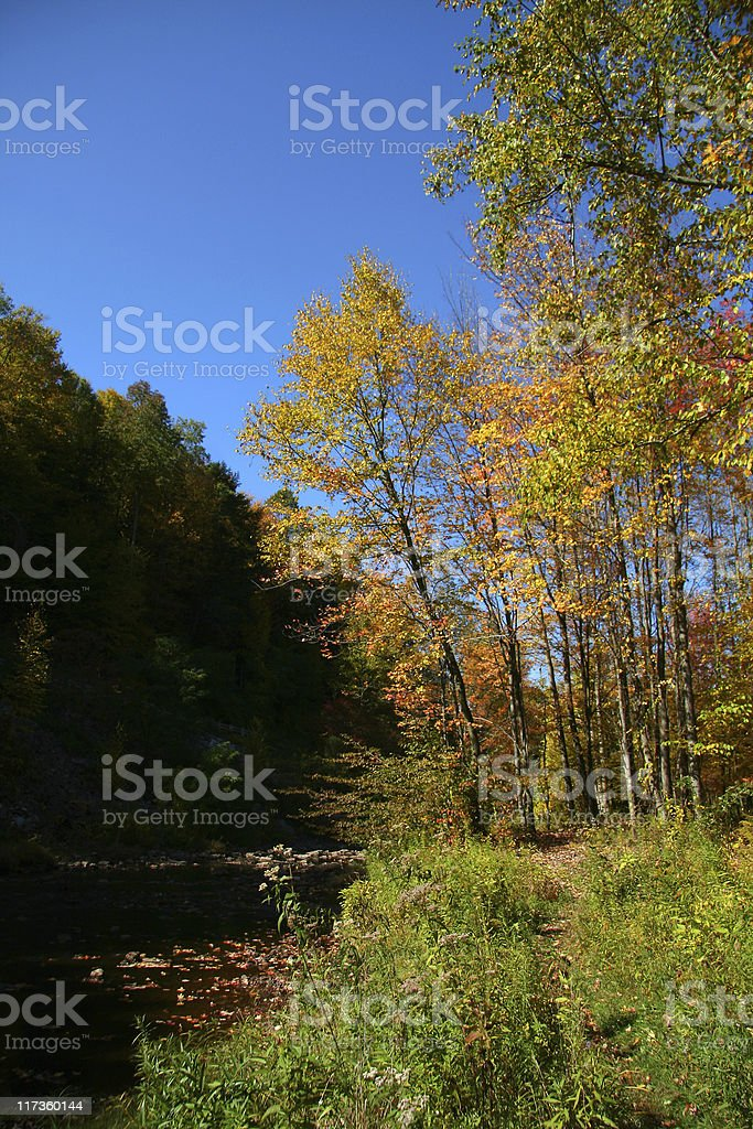 Colorful Trees By The Stream royalty-free stock photo