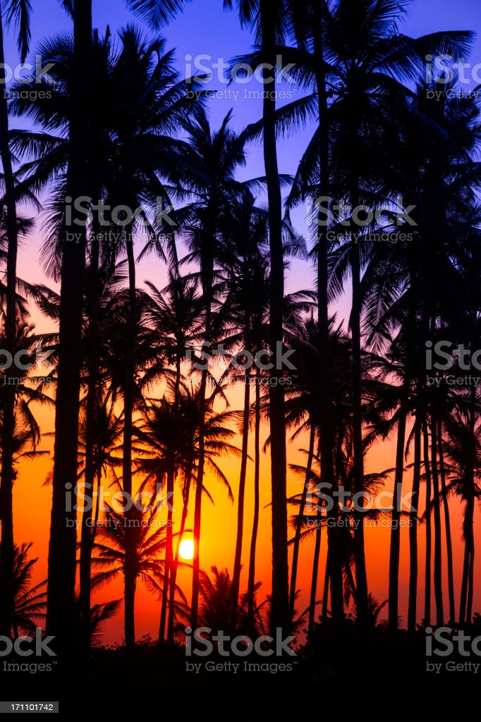 Colorful tropical coconut trees at sunrise royalty-free stock photo