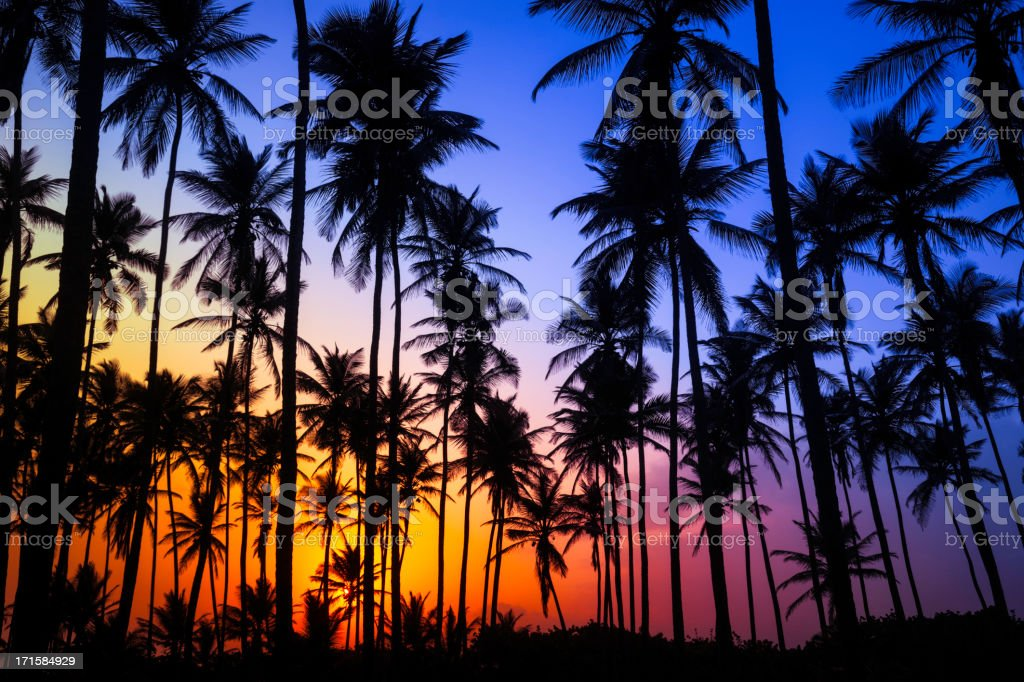 Colorful tropical coconut trees at sunrise stock photo