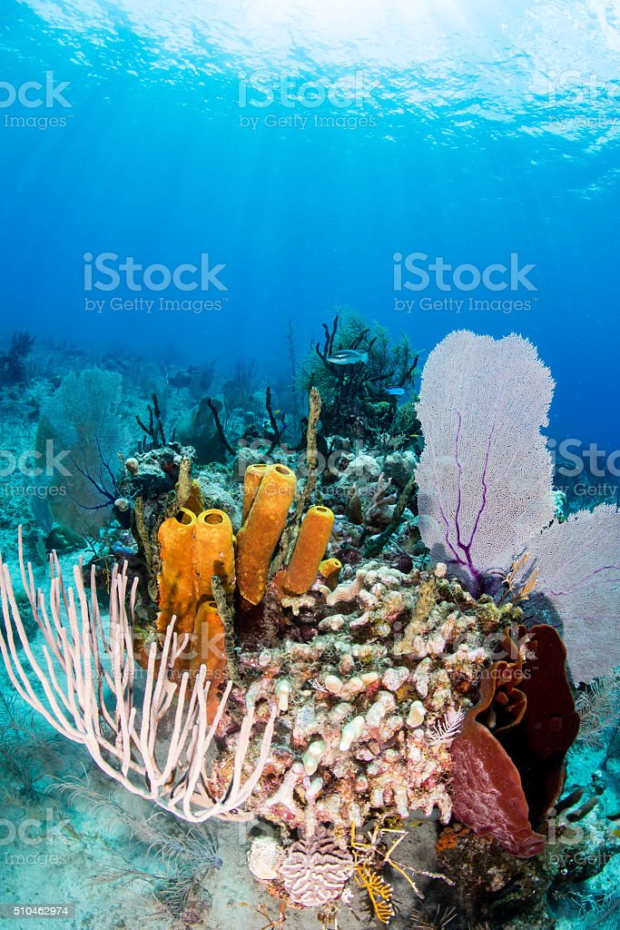 Colorful Tropical Coral Reef stock photo